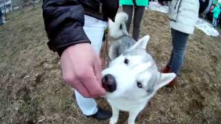 Download Ижевск Выставка собак Video