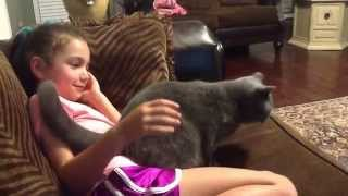 Download Blu the Cat wants attention & affection Video