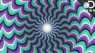 Download How Optical Illusions Trick Your Brain Video