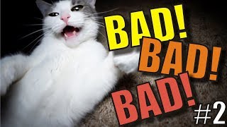 Download Talking Kitty Cat - BAD! BAD! BAD! #2 Video