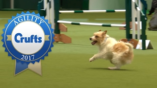 Download Hilarious Highlights from Rescue Dog Agility | Crufts 2017 Video