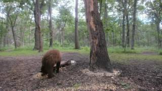 Download Bear Returns For A Look Under The Log 6 19 17 Video