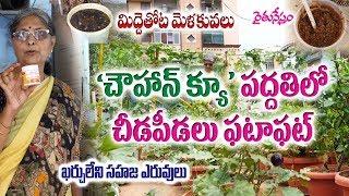 Download Organic Terrace Gardening – Chouhan – Q Process – Natural Fertilizers – Kousalya – Rytunestham Video