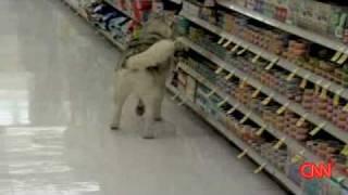 Download Shoplifting DOG Apologizes ! | Canine Returns To Scene Of Crime | KSL-TV Video