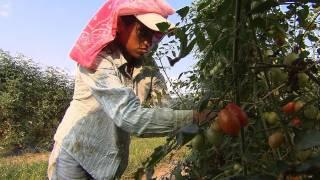 Download The debate on child farm labor Video