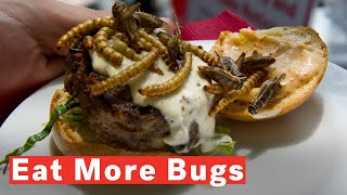 Download Why You Should Eat Insects Video