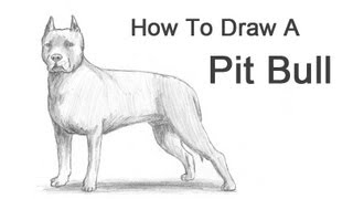 Download How to Draw a Dog (Pit Bull) Video