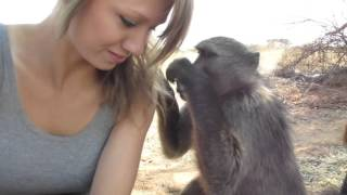 Download Being groomed by Shauna the baboon Video