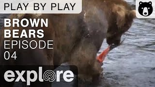 Download Brown Bear Play By Play - Ranger Mike Fitz - Katmai National Park - Episode 04 Video