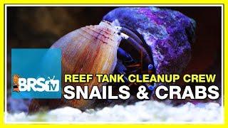Download Week 23: Reef tank clean-up crews: 40 or 400? | 52 Weeks of Reefing #BRS160 Video