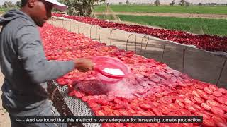 Download FAO Egypt 40th Anniversary Video