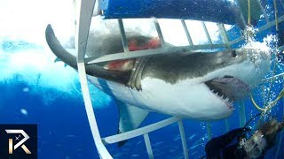 Download 10 TERRRIFYING Shark Encounters Caught On Tape Video