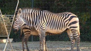 Download Découverte : le zoo de Montpellier Video