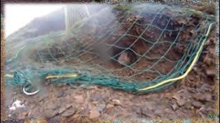 Download Trampa para conejos en acción-Rabbit trap in action Video