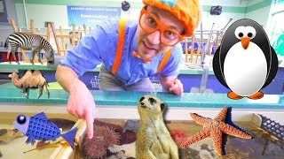 Download Blippi at the Zoo   Learn Animals for Children and Toddlers Video