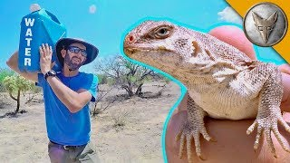 Download Catching a Lizard Using NOTHING but WATER! Video
