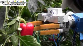 Download An Autonomous Harvesting Robot for Sweet-pepper in Greenhouses (Fin-Ray end-effector) Video