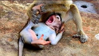 Download Cruel monkey maltreat baby so much, Baby cry & cry , Mum help me ! Baby feeling hungry #2176 Video