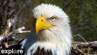 Download Decorah Eagles powered by EXPLORE.org Video