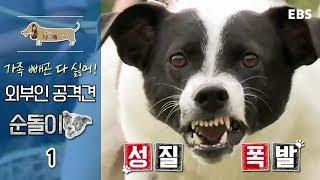 Download 세상에 나쁜 개는 없다 - 가족 빼곤 다 싫어! 외부인 공격견 순돌이 #001 Video