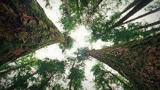 Download How trees talk to each other | Suzanne Simard Video
