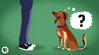 Download Does My Dog Know What I'm Thinking? Video