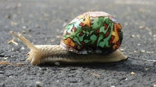 Download The Art of Snails and Snails in Art - Professor Steve Jones Video