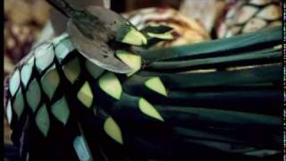 Download Rutas de México Video