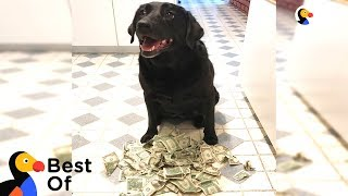 Download Independent Dogs That Don't Need Hoomans   The Dodo Best Of Video