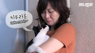 Download A stalker cat begging him to be her owner?! Video