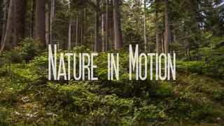 Download Nature in Motion [4K Ultra HD] Video