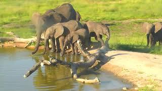 Download Djuma: Breeding herd of Elephants come for nice long visitd - 17:01 - 02/20/19 Video