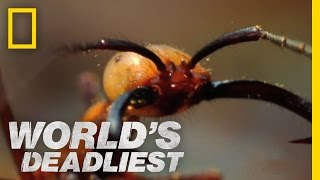 Download Army Ants Eat Everything | World's Deadliest Video
