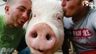 Download 'Mini Pig' Grows ENORMOUS so Dads Move to the Countryside Just for Her | The Dodo Video