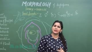 Download Morphology of Angiosperms-II Families Video