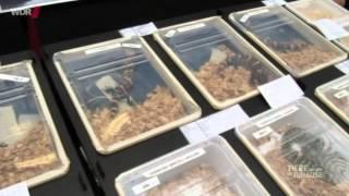 Download Tiere suchen ein Zuhause Gefährliche Reptilien Video