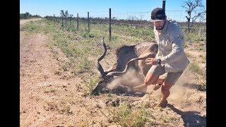Download Kudu Rescue in Central Kalahari Video