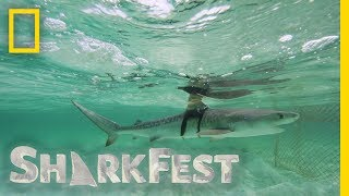 Download Tracking Tiger Sharks at Night | SharkFest Video