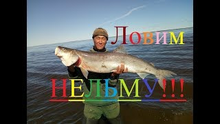 Download Ловим нельму и омуля! Рыбалка в Якутии! Yakutia Video