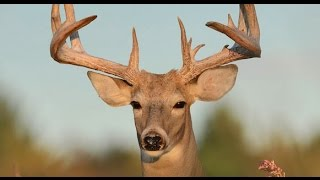 Download The Top 10 Best Deer Hunting States - and Worst! Video