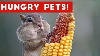 Download The Funniest Hungry Pet & Animal Videos Weekly Compilation 2016 | Funny Pet Videos Video