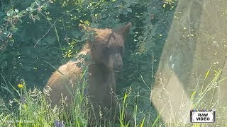 Download Bear caught on camera Video