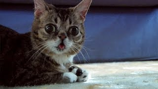 Download Try Not To Laugh Challenge - Funny Cats! Video