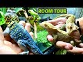 Download Reptile and Amphibian Room Tour July 2017 Video