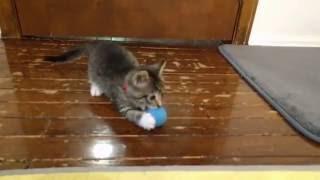 Download Harv has a Ball Video