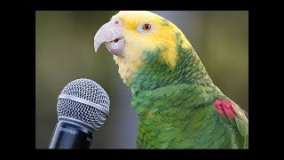 Download Funny Parrot - A Cute Funny Parrots Talking Videos Compilation ||NEW HD Video