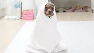 Download 목욕하고 현타 제대로 맞은 강아지..ㅋㅋ Video