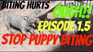 Download stop puppy biting or nipping pup bite mouthing elimination pit bull dog shepherd Video