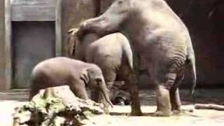 Download Elephant sex 2 Video