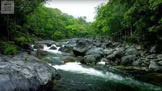 Download 10 Hours Of Relaxing Jungle Sounds | Planet Earth II | Earth Unplugged Video